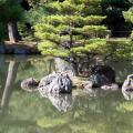 japon-arbre-reflet.jpg